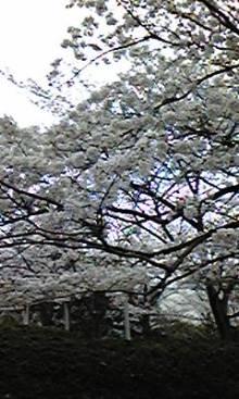 アナログWEBプロデューサー、松田知樹のPC嫌い日記-100403_123519.jpg